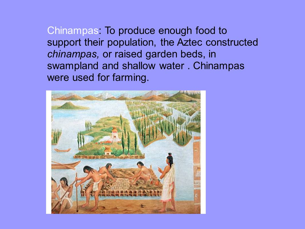 Chinampas: To produce enough food to support their population, the Aztec constructed chinampas, or raised garden beds, in swampland and shallow water.