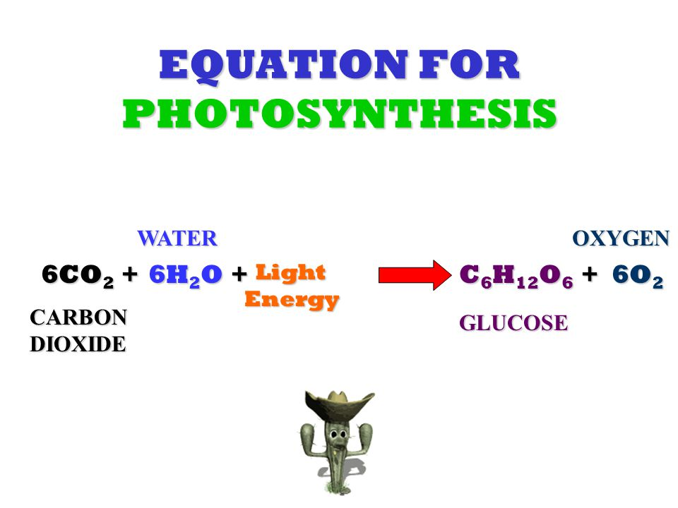 EQUATION FOR PHOTOSYNTHESIS 6CO 2 + 6H 2 O + Light Energy Light Energy C 6 H 12 O 6 + 6O 2 CARBON DIOXIDE WATER GLUCOSE OXYGEN