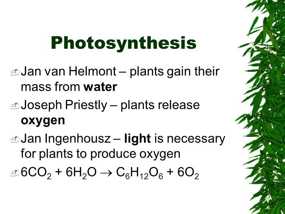 Photosynthesis  Jan van Helmont – plants gain their mass from water  Joseph Priestly – plants release oxygen  Jan Ingenhousz – light is necessary for plants to produce oxygen  6CO 2 + 6H 2 O  C 6 H 12 O 6 + 6O 2
