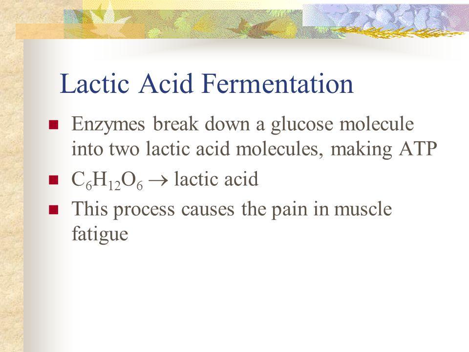 Lactic Acid Fermentation Enzymes break down a glucose molecule into two lactic acid molecules, making ATP C 6 H 12 O 6  lactic acid This process caus