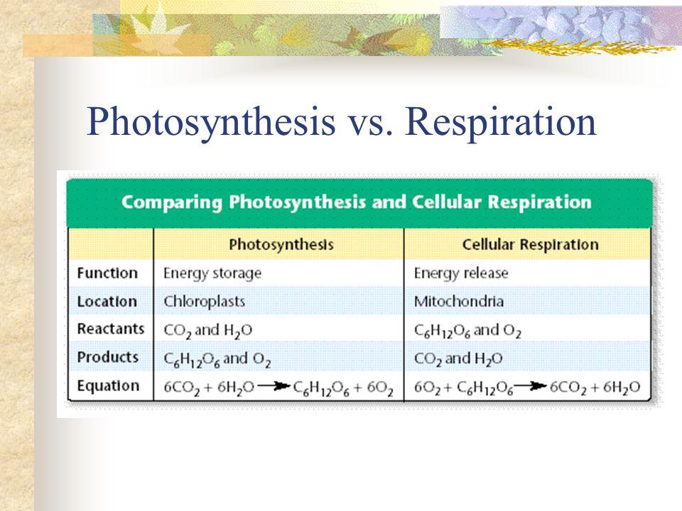 Photosynthesis vs. Respiration