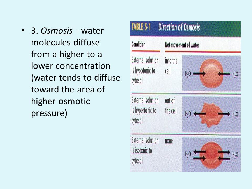 3. Osmosis - water molecules diffuse from a higher to a lower concentration (water tends to diffuse toward the area of higher osmotic pressure)