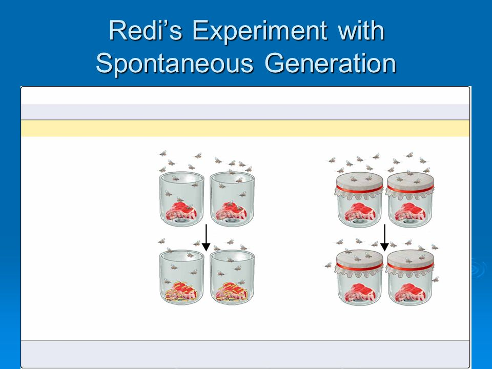 Redi's Experiment with Spontaneous Generation