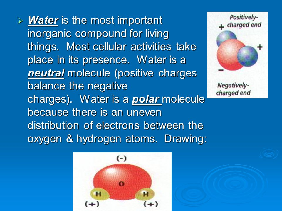  Water is the most important inorganic compound for living things.