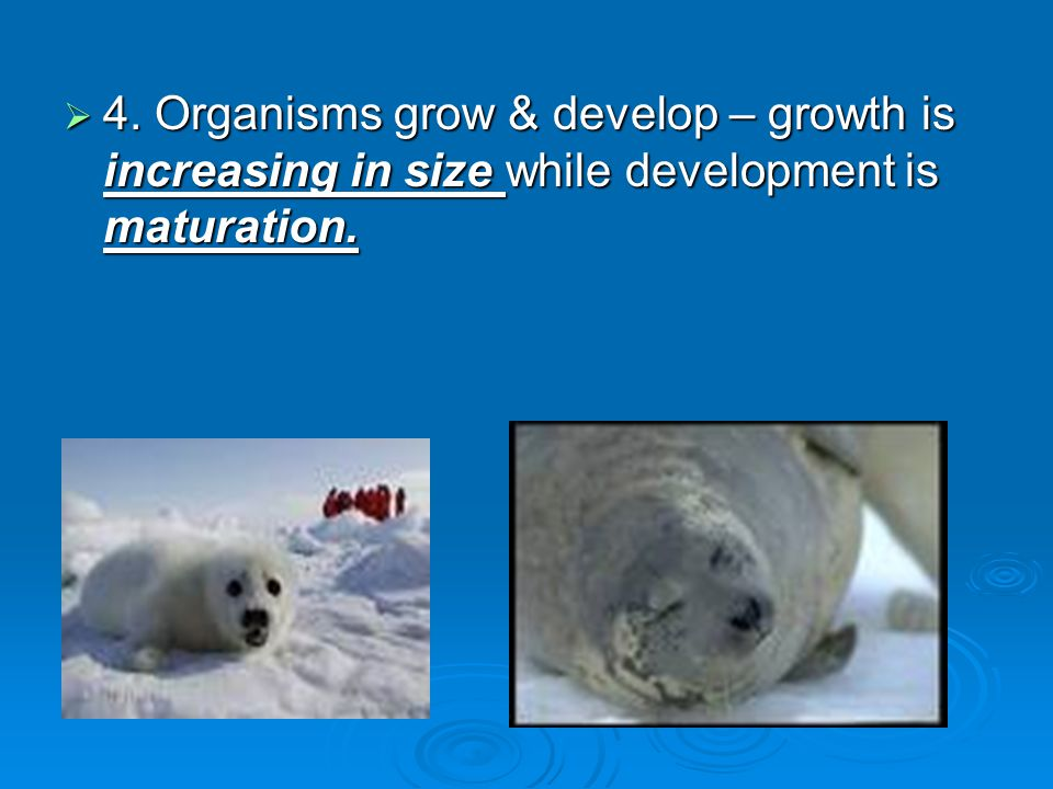  4. Organisms grow & develop – growth is increasing in size while development is maturation.