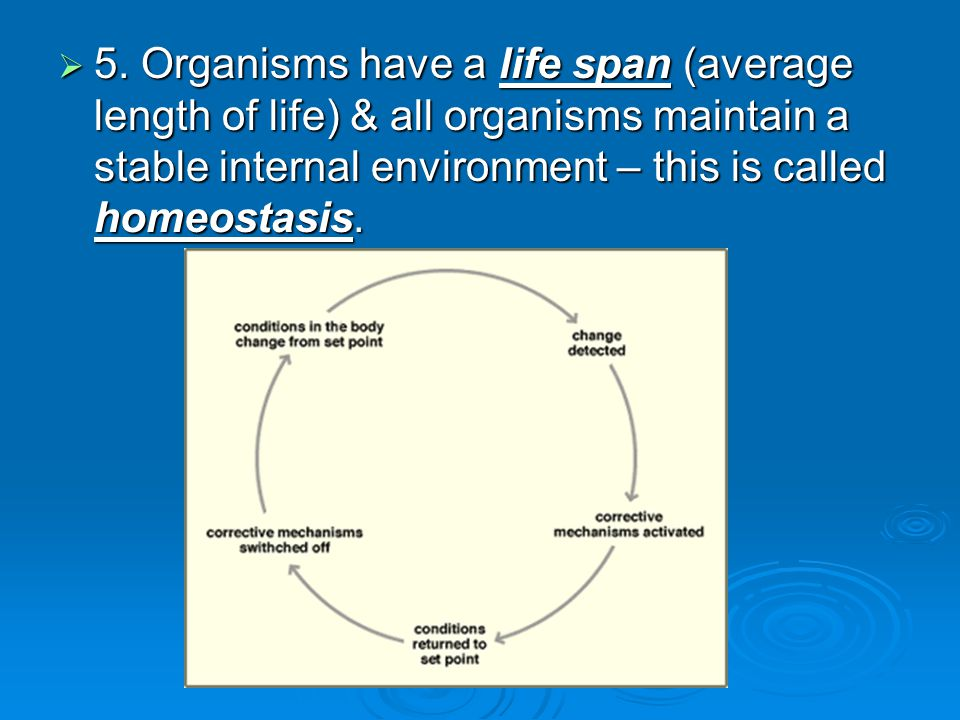  5. Organisms have a life span (average length of life) & all organisms maintain a stable internal environment – this is called homeostasis.  5. Org