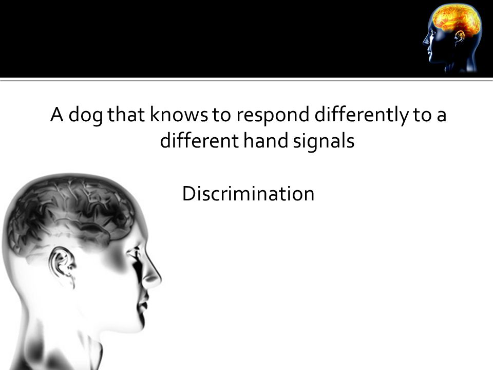 A dog that knows to respond differently to a different hand signals Discrimination