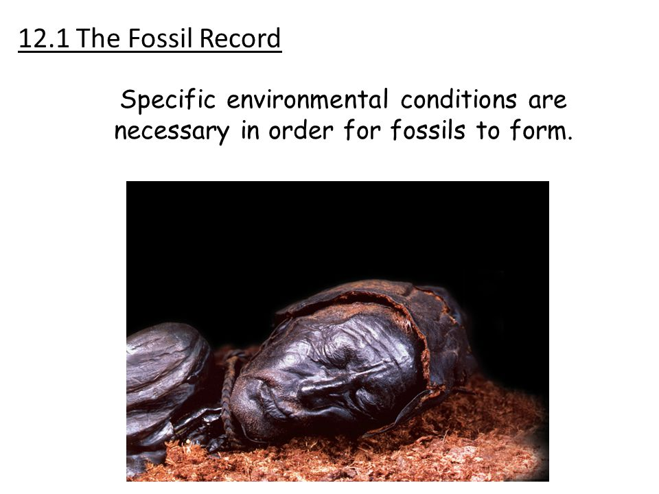 Specific environmental conditions are necessary in order for fossils to form. 12.1 The Fossil Record