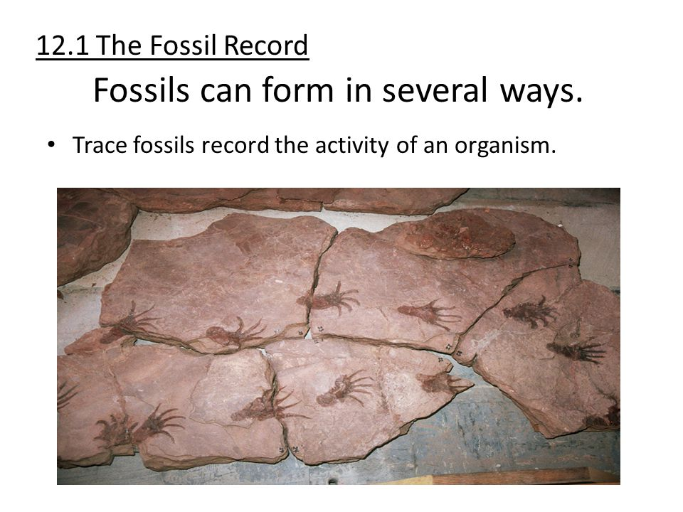 Trace fossils record the activity of an organism. Fossils can form in several ways. 12.1 The Fossil Record