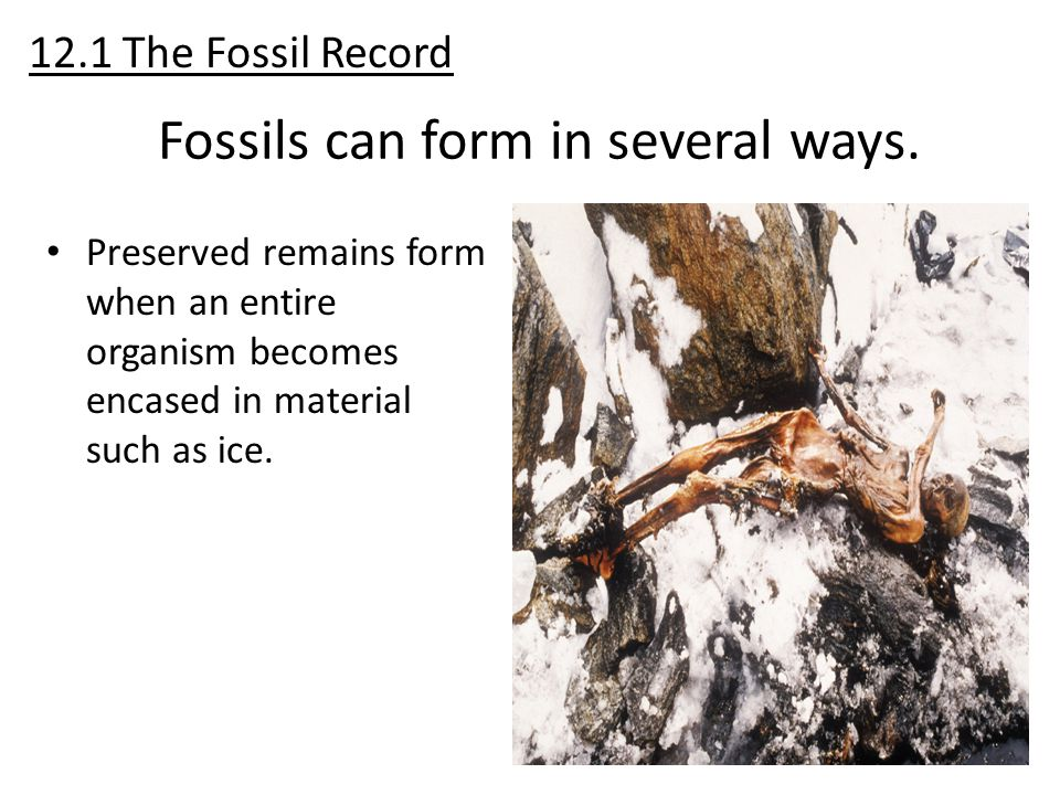Preserved remains form when an entire organism becomes encased in material such as ice. 12.1 The Fossil Record