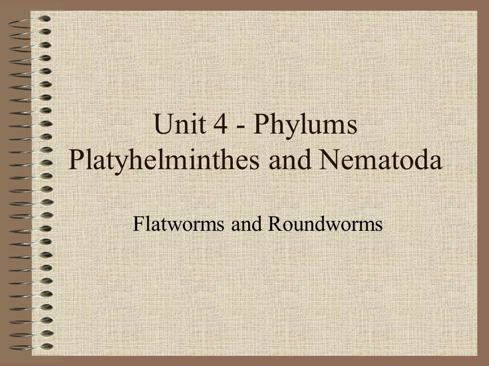 Phylum Nematoda Long, cylindrical bodies Majority microscopic and free-living One-way digestive system Thick, flexible epidermis protects and gives shape Layer of muscle underneath pulls at epidermis and pseudocoelem for whip-like movement