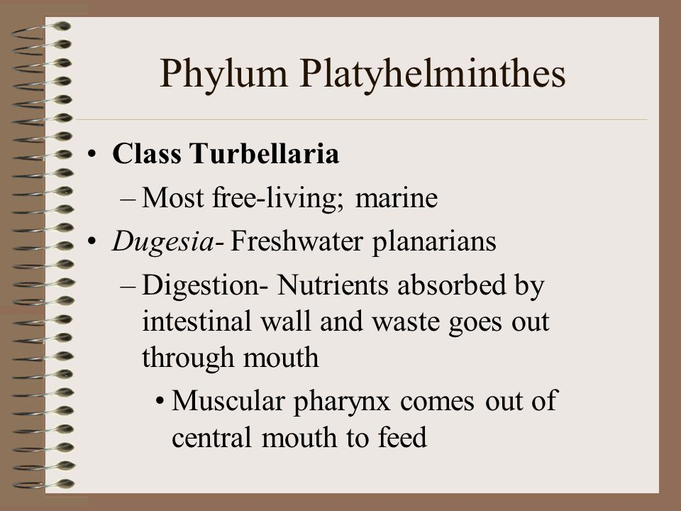 Phylum Platyhelminthes Largest flatworm class, Trematoda flukes –Parasitic worms called flukes –Endoparasites ectoparasites –Endoparasites or ectoparasites Subclass Aspidogastrea (Aspidobothrea)- Endoparasite of mollusksSubclass Aspidogastrea (Aspidobothrea)- Endoparasite of mollusks Subclass Digenea- Endoparasites of vertebratesSubclass Digenea- Endoparasites of vertebrates