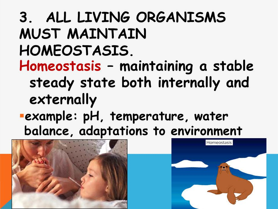 3. ALL LIVING ORGANISMS MUST MAINTAIN HOMEOSTASIS. Homeostasis – maintaining a stable steady state both internally and externally  example: pH, tempe