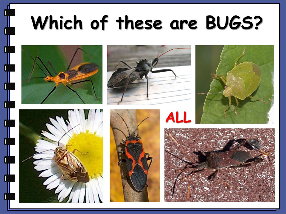 Which of these are BUGS? ALL