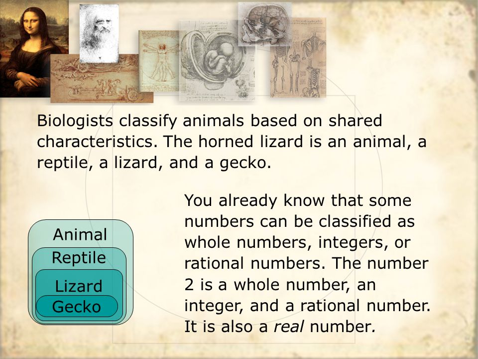 Animal Reptile Biologists classify animals based on shared characteristics. The horned lizard is an animal, a reptile, a lizard, and a gecko. You alre