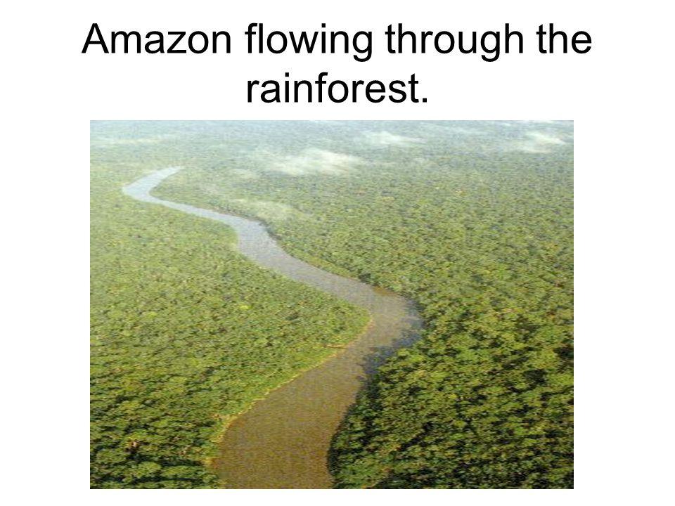 Amazon River Basin (dark green)