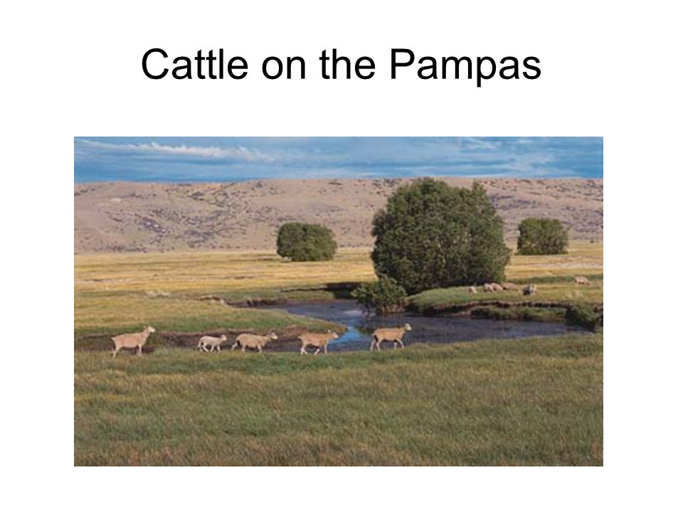 Grasslands  Pampas  In Argentina  Used for grazing and farming  Llanos  In Venezuela  Used for grazing and farming