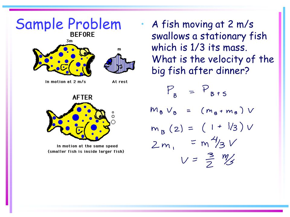 Sample Problem A fish moving at 2 m/s swallows a stationary fish which is 1/3 its mass. What is the velocity of the big fish after dinner?