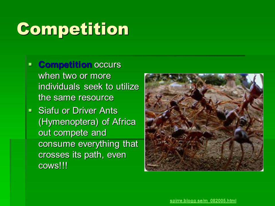 Competition  Competition occurs when two or more individuals seek to utilize the same resource  Siafu or Driver Ants (Hymenoptera) of Africa out compete and consume everything that crosses its path, even cows!!.