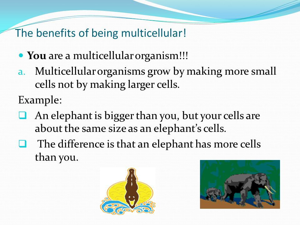 The benefits of being multicellular.You are a multicellular organism!!.