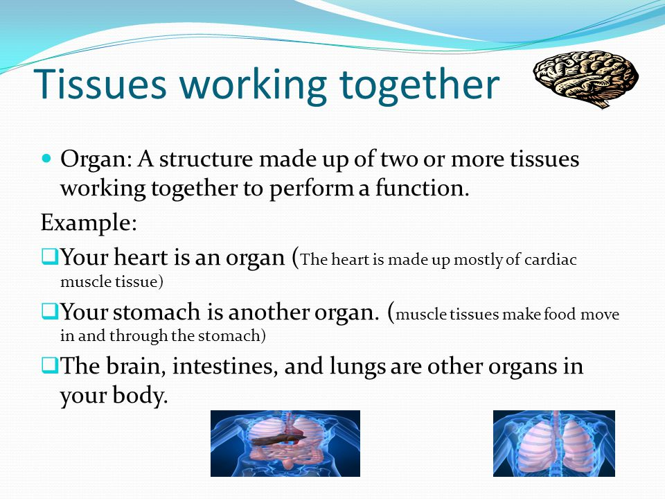 Tissues working together Organ: A structure made up of two or more tissues working together to perform a function. Example:  Your heart is an organ (