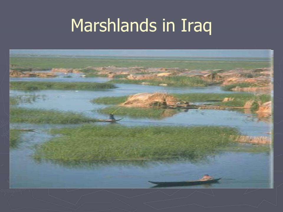 Marshlands in Iraq