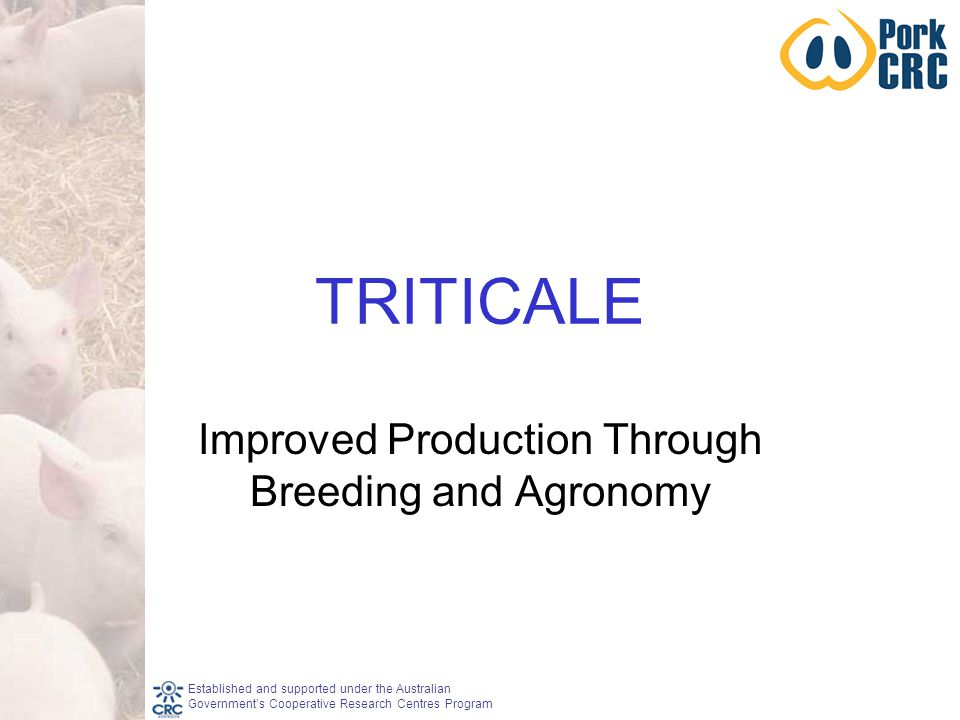 Established and supported under the Australian Government's Cooperative Research Centres Program TRITICALE Improved Production Through Breeding and Agronomy
