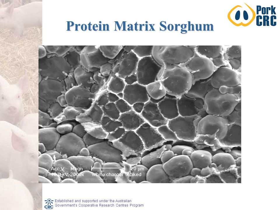 Established and supported under the Australian Government's Cooperative Research Centres Program Protein Matrix Sorghum
