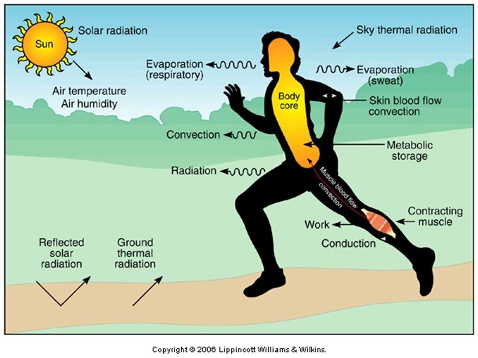 EDU2EXP Exercise & Performance