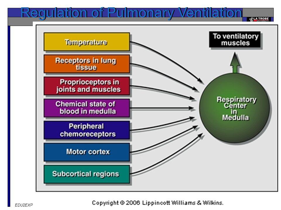 EDU2EXP Exercise & Performance Regulation of Pulmonary Ventilation