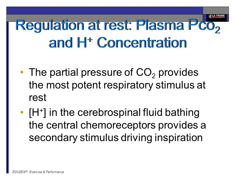 EDU2EXP Exercise & Performance Regulation at rest: Plasma Pco 2 and H + Concentration The partial pressure of CO 2 provides the most potent respirator