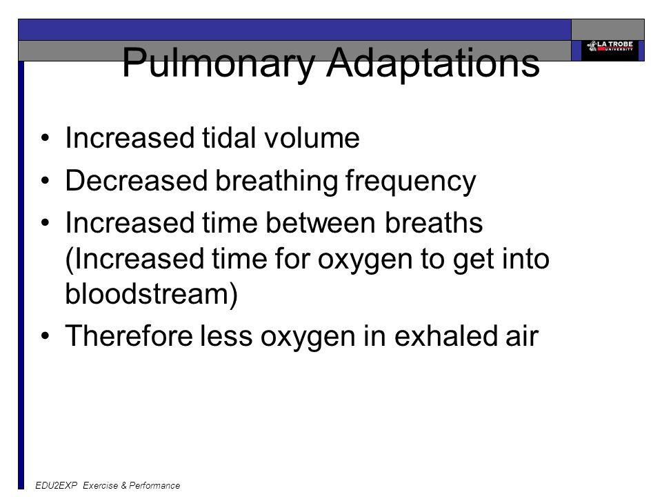 EDU2EXP Exercise & Performance Pulmonary Adaptations Increased tidal volume Decreased breathing frequency Increased time between breaths (Increased ti