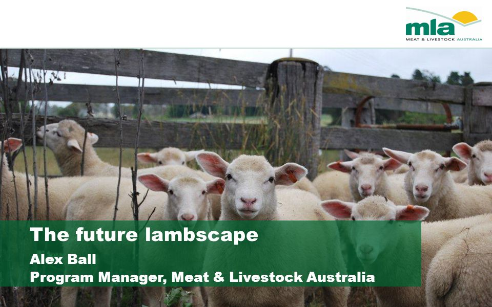 The future lambscape Alex Ball Program Manager, Meat & Livestock Australia