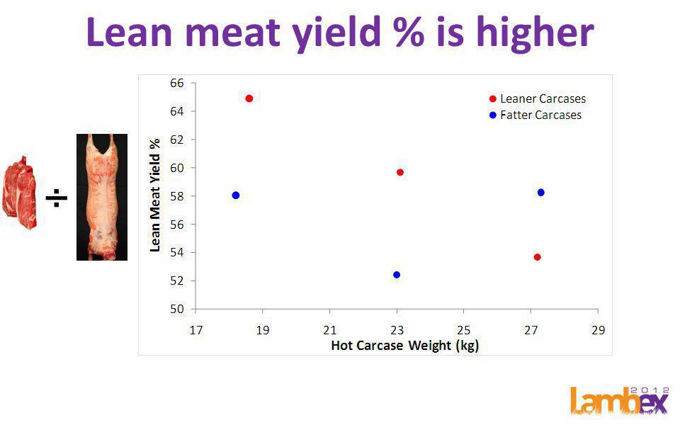 Lean meat yield % is higher ÷