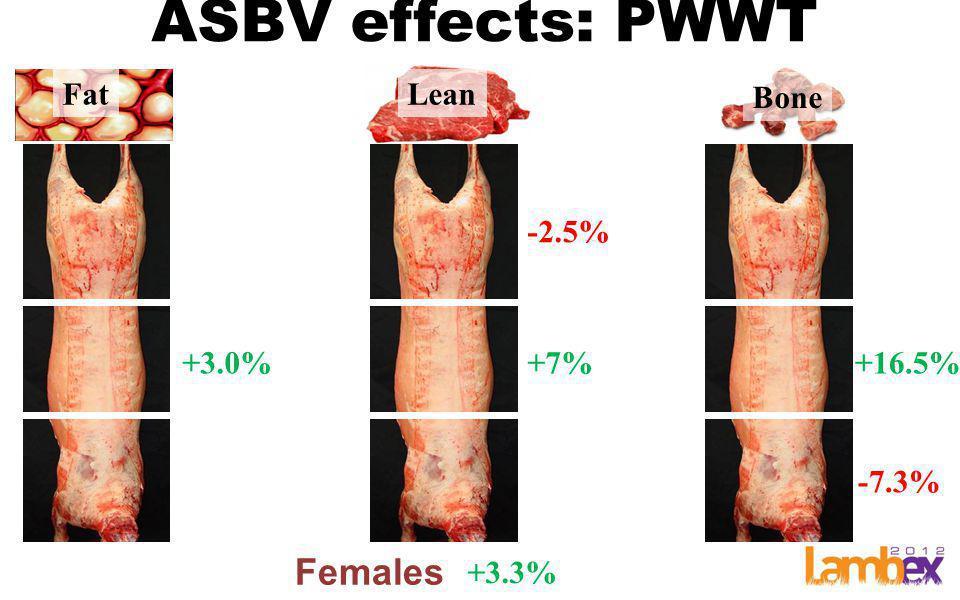 ASBV effects: PWWT FatLean Bone Females +3.3% +3.0%+7% -2.5% +16.5% -7.3%