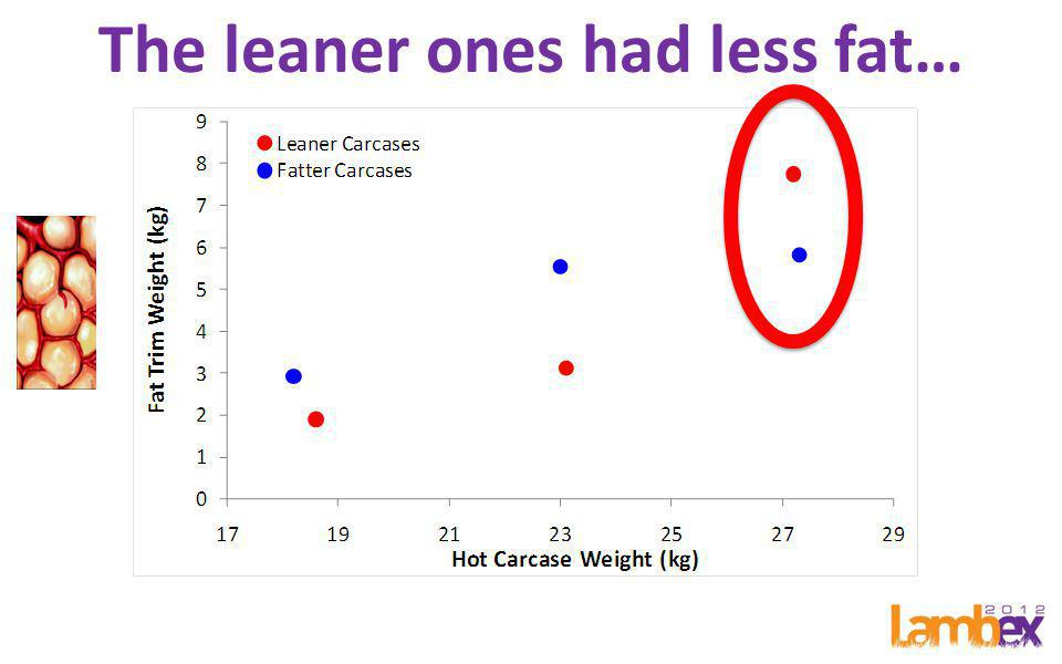 The leaner ones had more muscle!