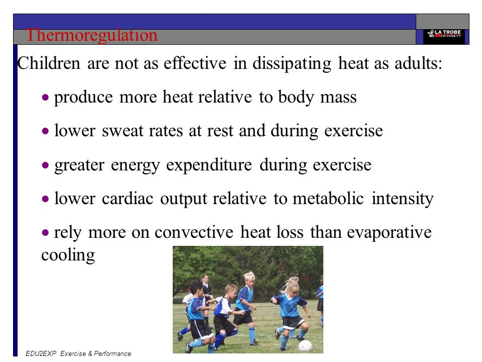 EDU2EXP Exercise & Performance Thermoregulation Children are not as effective in dissipating heat as adults:  produce more heat relative to body mass  lower sweat rates at rest and during exercise  greater energy expenditure during exercise  lower cardiac output relative to metabolic intensity  rely more on convective heat loss than evaporative cooling
