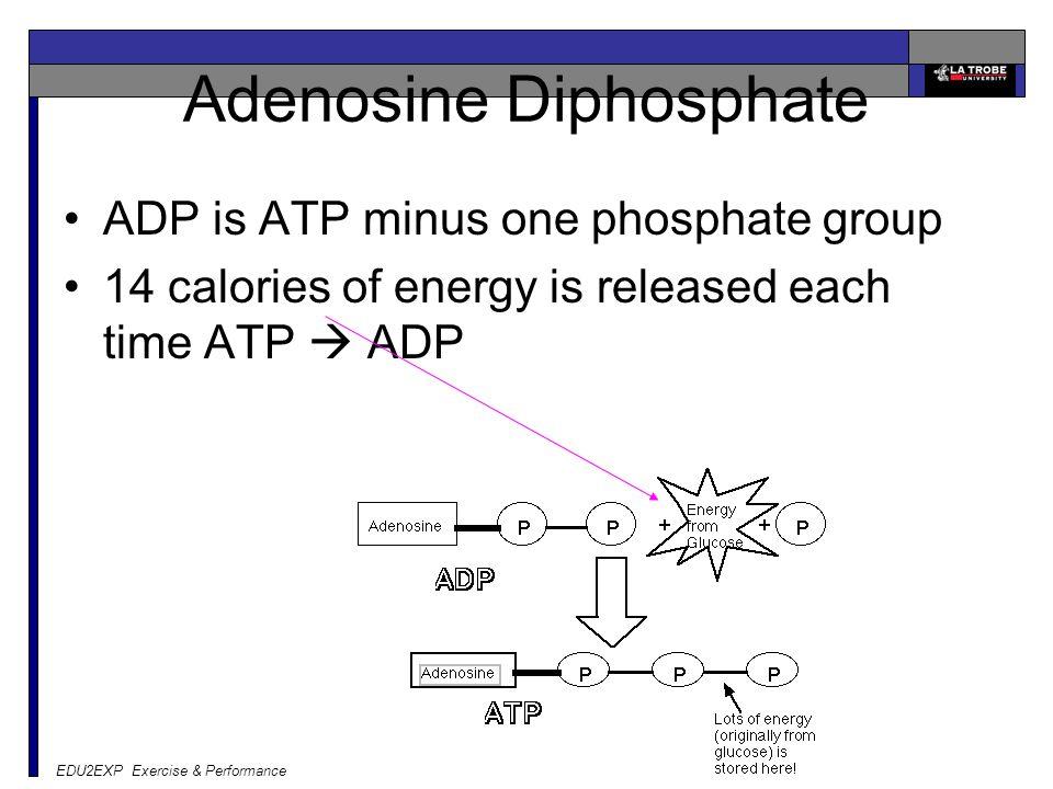 EDU2EXP Exercise & Performance Adenosine Diphosphate ADP is ATP minus one phosphate group 14 calories of energy is released each time ATP  ADP