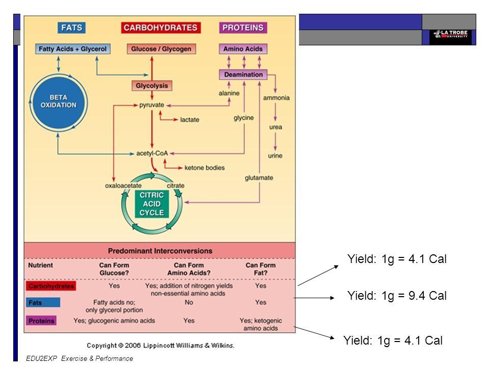 EDU2EXP Exercise & Performance Yield: 1g = 4.1 Cal Yield: 1g = 9.4 Cal