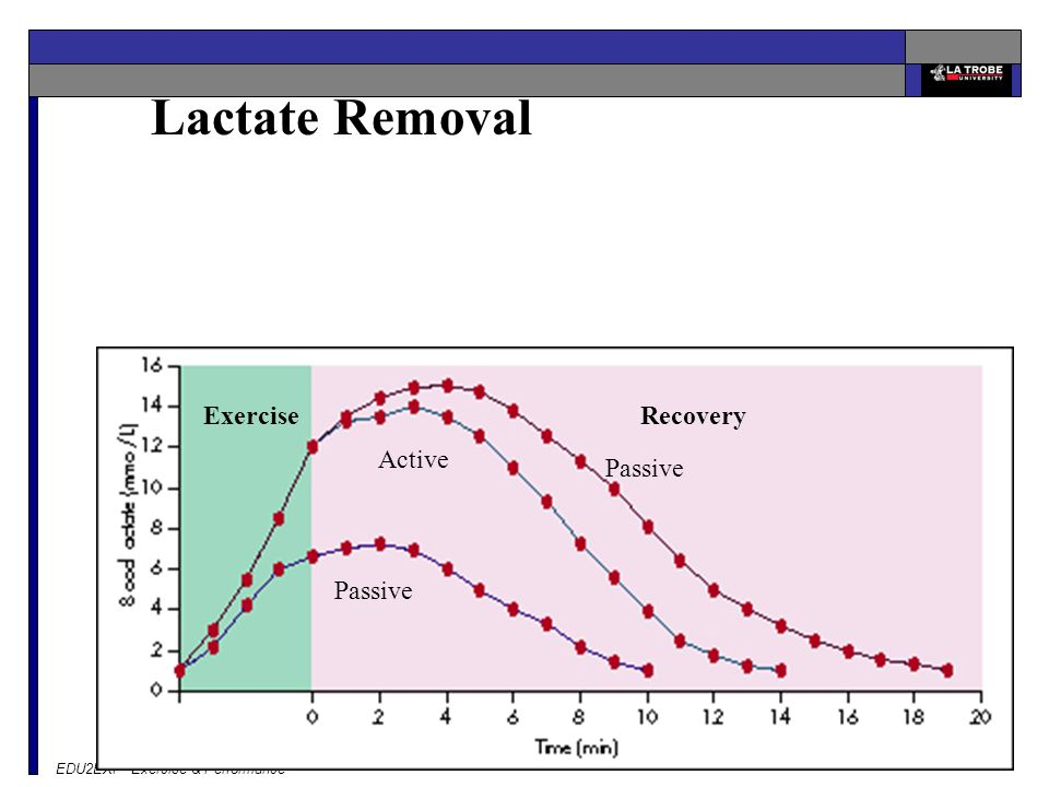 EDU2EXP Exercise & Performance Lactate Removal ExerciseRecovery Passive Active Passive