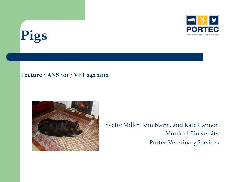 Yvette Miller, Kim Nairn, and Kate Gannon Murdoch University Portec Veterinary Services Pigs Lecture 1 ANS 101 / VET 242 2012