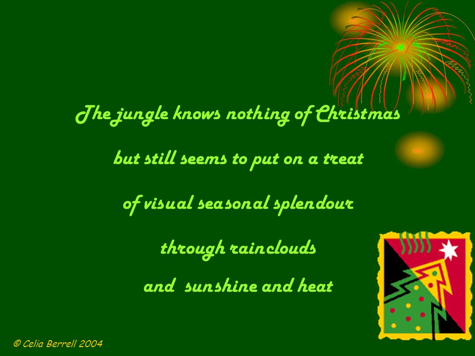 At night time the fire flies are flash ing and fung i glow lum in ous green The leaves by the creeks are be jew elled with col our ful tree frogs in teams © Celia Berrell 2004