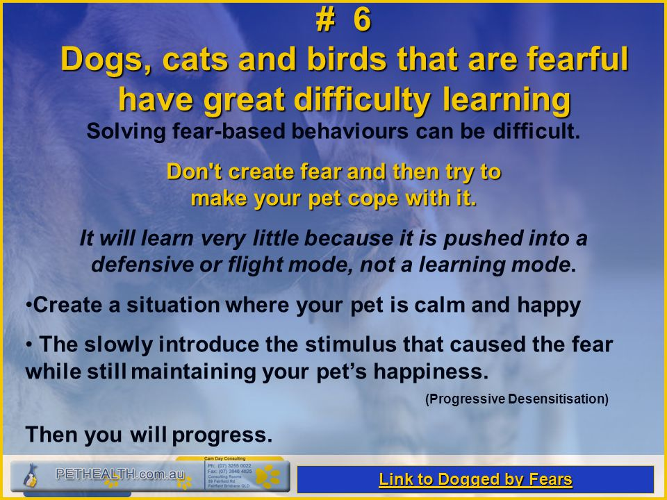 # 6 Dogs, cats and birds that are fearful have great difficulty learning Solving fear-based behaviours can be difficult. Don't create fear and then tr