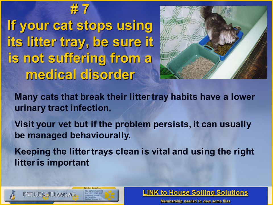 # 7 If your cat stops using its litter tray, be sure it is not suffering from a medical disorder Many cats that break their litter tray habits have a