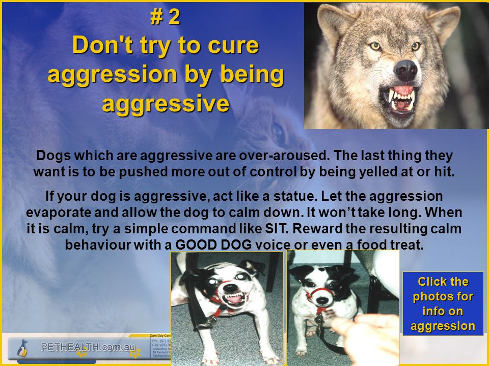 # 2 Don't try to cure aggression by being aggressive Dogs which are aggressive are over ‑ aroused. The last thing they want is to be pushed more out o