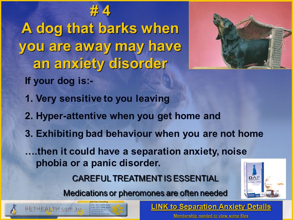 # 4 A dog that barks when you are away may have an anxiety disorder If your dog is:- 1. 1.Very sensitive to you leaving 2. 2.Hyper-attentive when you