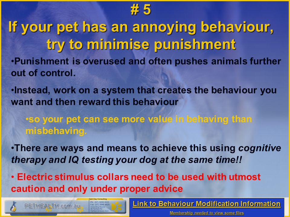 # 5 If your pet has an annoying behaviour, try to minimise punishment Punishment is overused and often pushes animals further out of control. Instead,