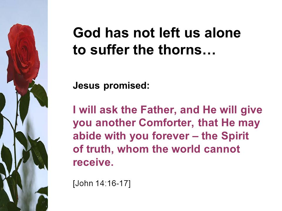 God has not left us alone to suffer the thorns… Jesus promised: I will ask the Father, and He will give you another Comforter, that He may abide with you forever – the Spirit of truth, whom the world cannot receive.