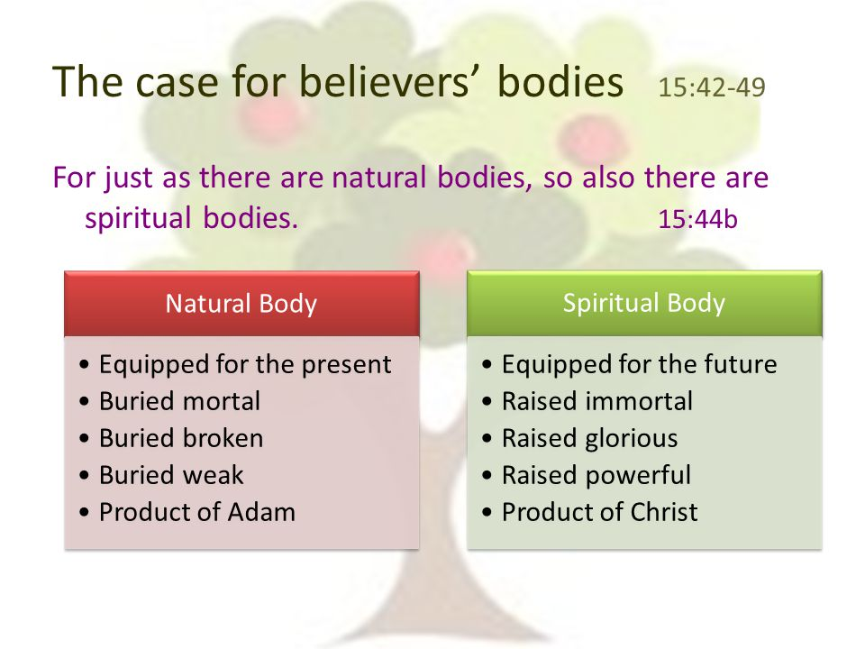 The case for believers' bodies 15:42-49 For just as there are natural bodies, so also there are spiritual bodies.