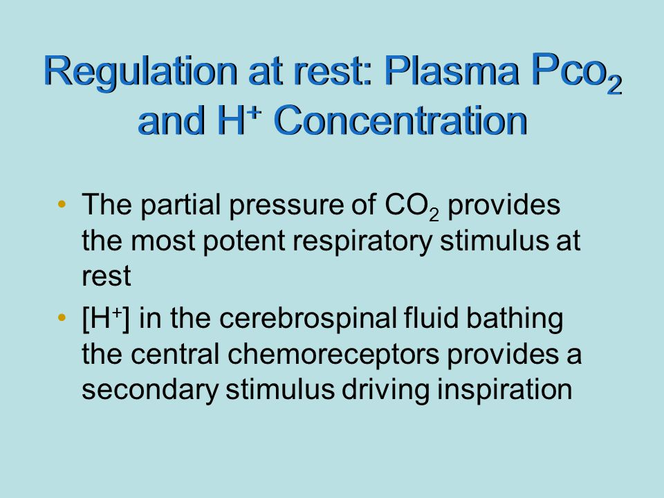 Regulation at rest: Plasma Pco 2 and H + Concentration The partial pressure of CO 2 provides the most potent respiratory stimulus at rest [H + ] in th